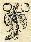 Alraune Mandragora - die bekannteste Zauberpflanze - Abb. v. Pietro de Crescenzi 1583