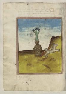 Mandragora Abbildung aus dem Anholter Kräuterbuch Copy Schloss Moyland