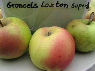 Apfel Gronces Laxton Superb Foto Brandt