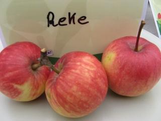 Apfel Reke Foto Brandt