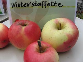 Apfel Winterstaffette Foto Brandt