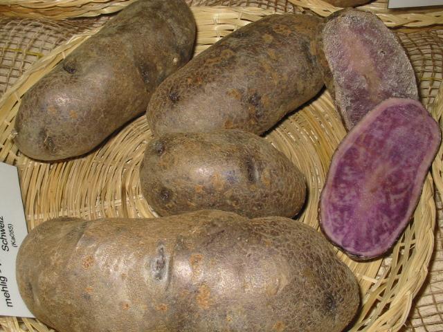 bintje kartoffel