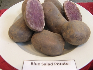 Blue Salad Potato Foto Brandt